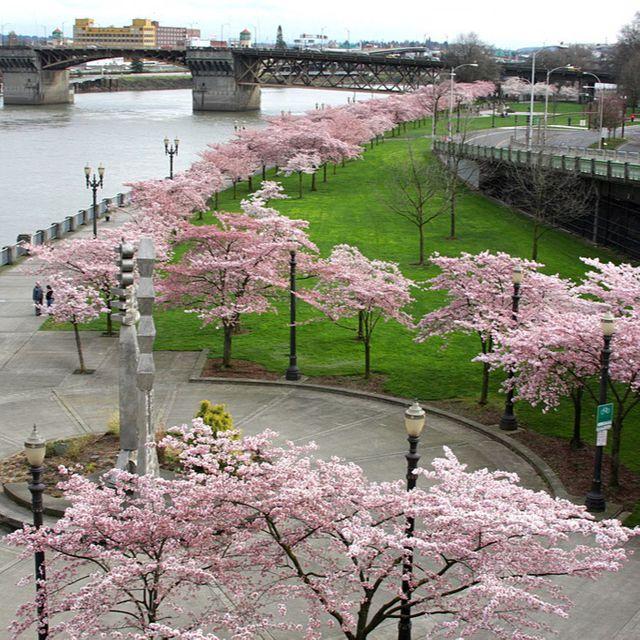 Riverfront Walk